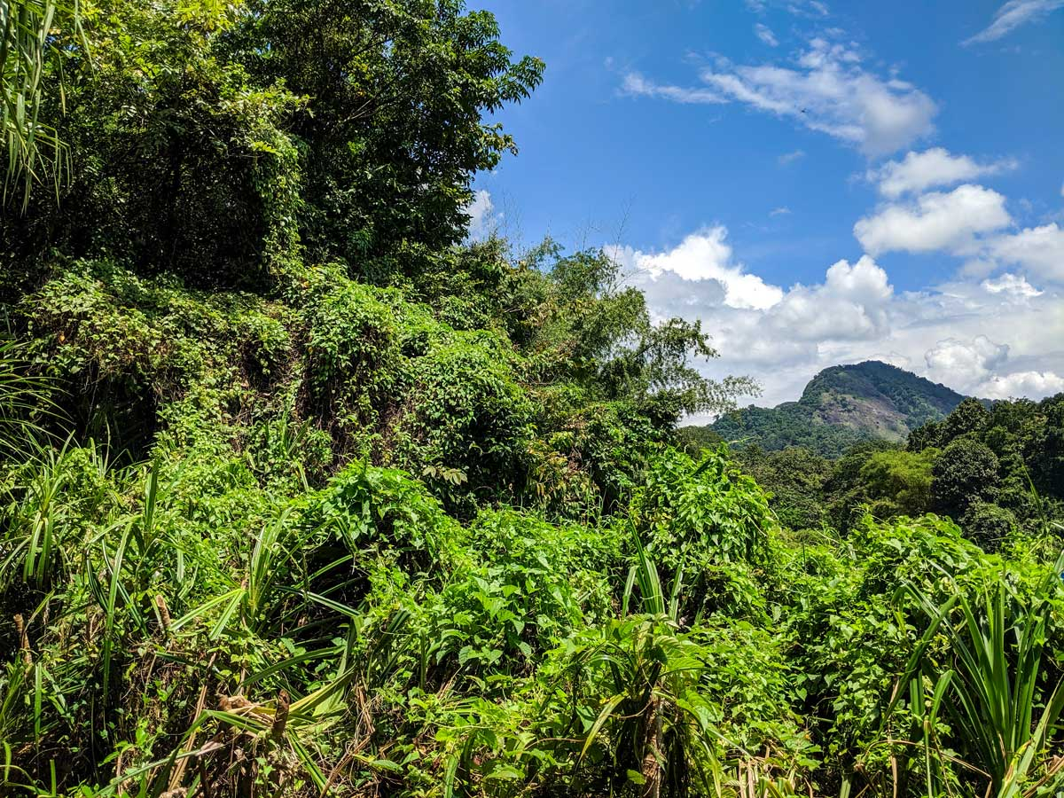 Beautiful lush forests along the trail of Biking in Western Ghats Tour in Kerala