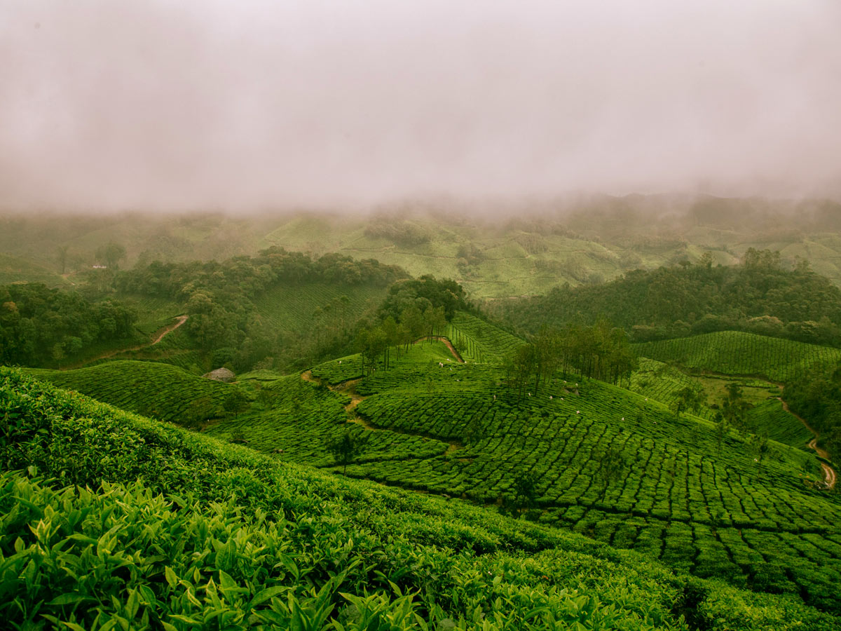 Lush green fields of Western Ghats seen on a biking tour with a guide