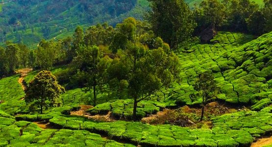 Luxury Trek Western Ghats