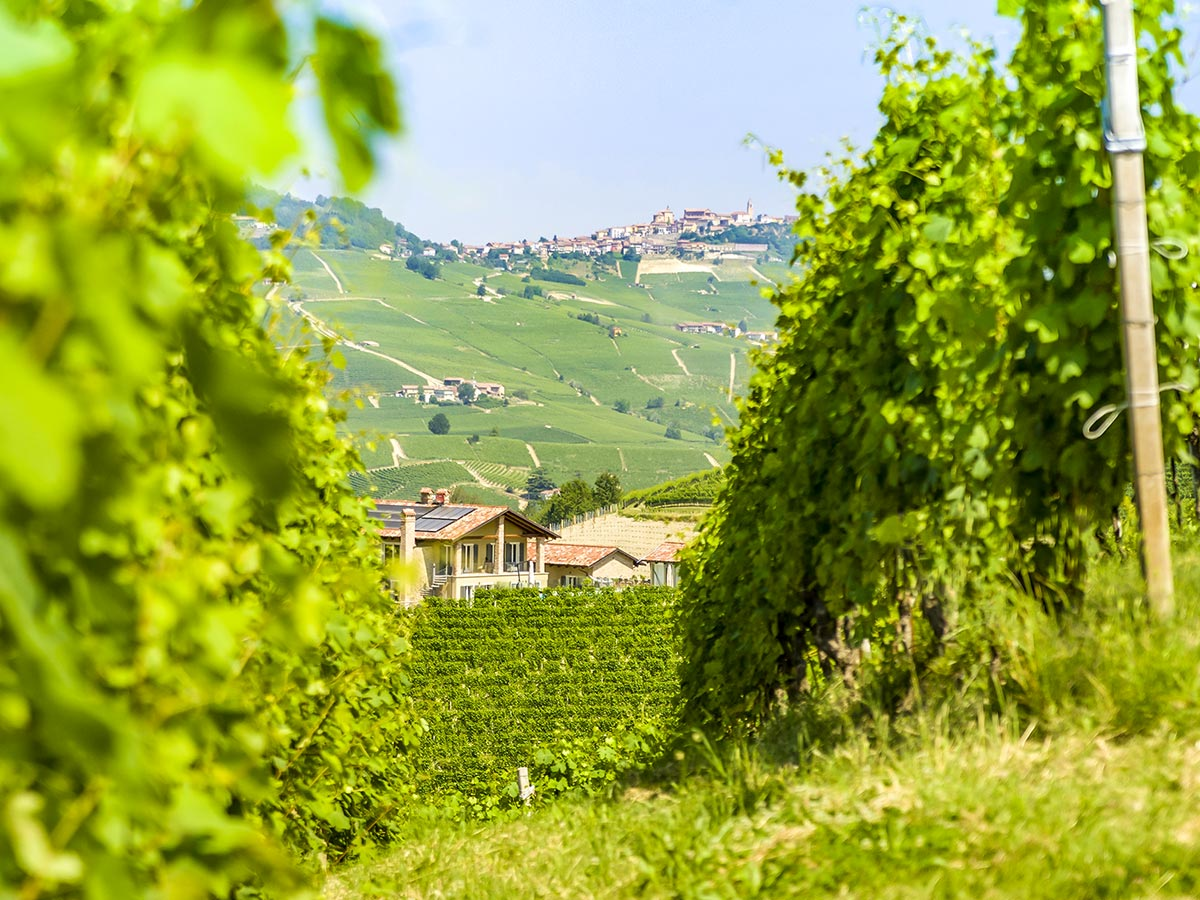 Beautiful views of Italian countryside seen on Biking in Piedmonte Tour around Alba