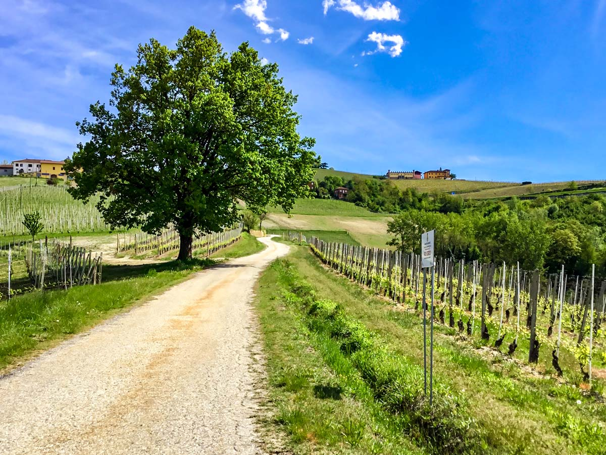 Countryside of Piedmone is famous among vinemakers