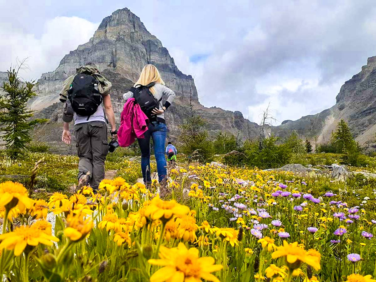 Group of hikers in the Canadian Rockies hiking among the mountains and flowers