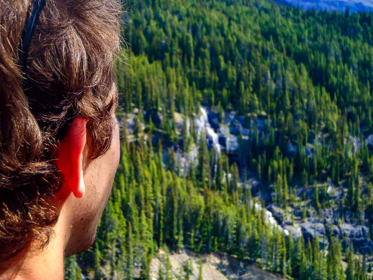 Looking down on green forests in the Canadian Rocky Mountains