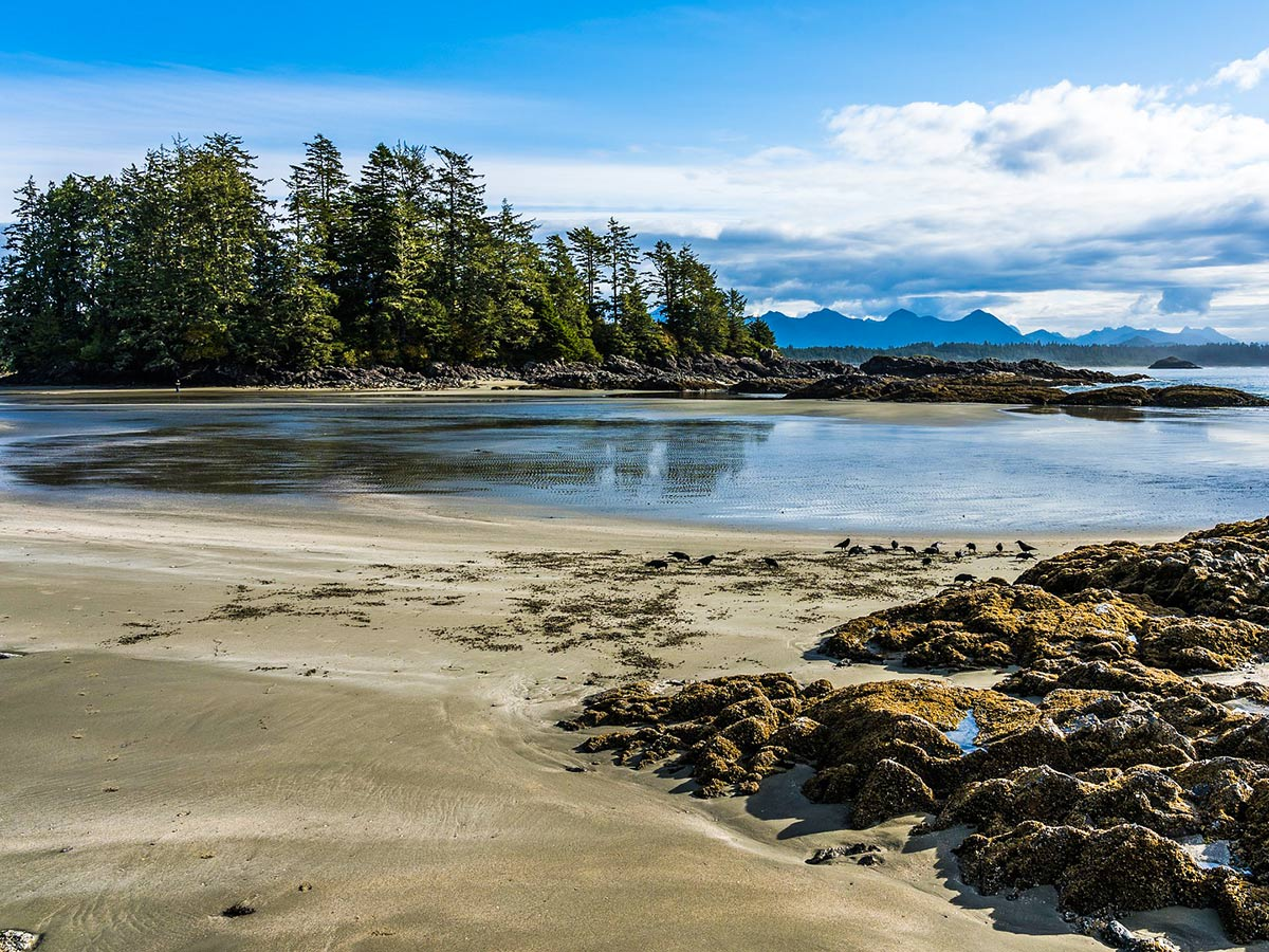 Beautiful wild beach in Vancouver Island seen on guided tour