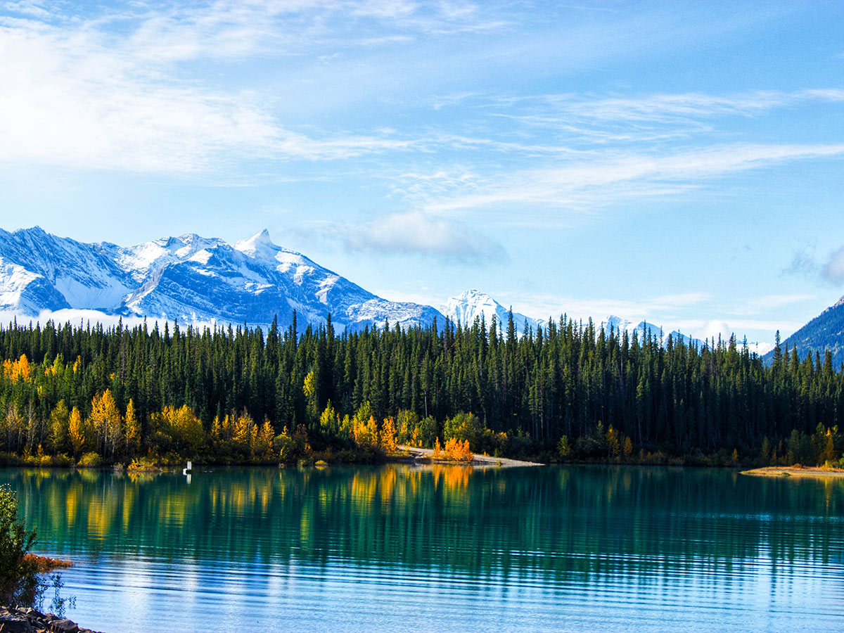 Lush forest reflecting in the Emerald Lake in the Canadian Rockies