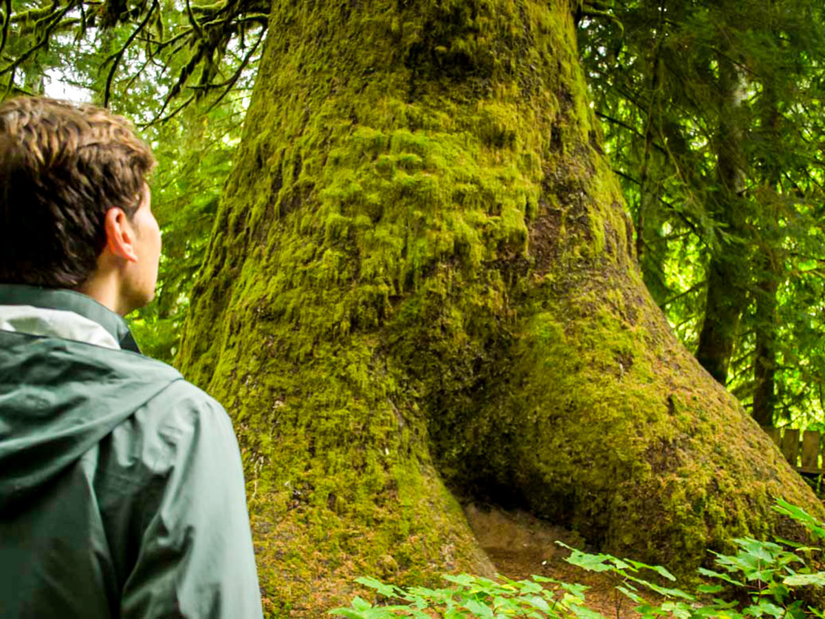 Visiting the Cathedral Grove on 8 day guided hiking and camping tour in Vancouver Island