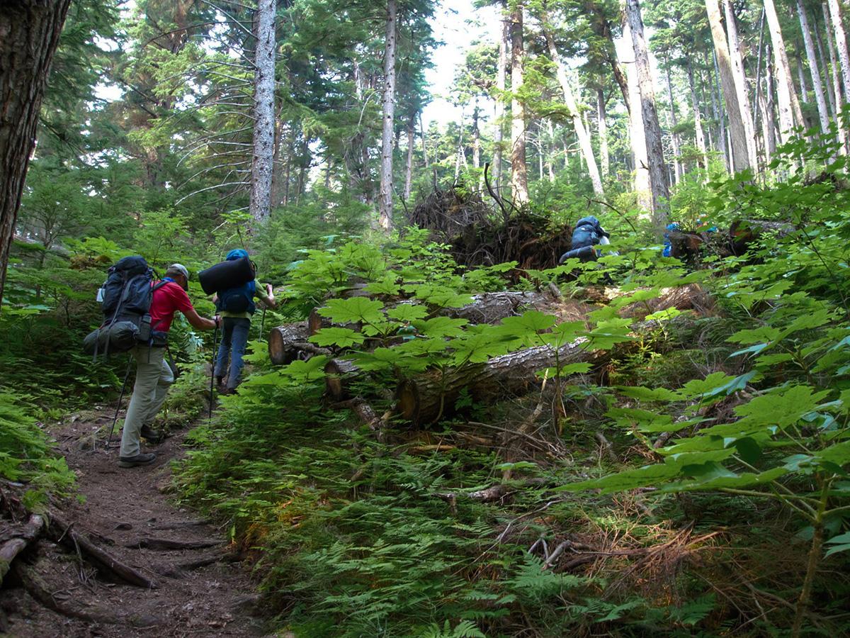 Chilkoot-Trail-path-through-the-rainforest.jpg