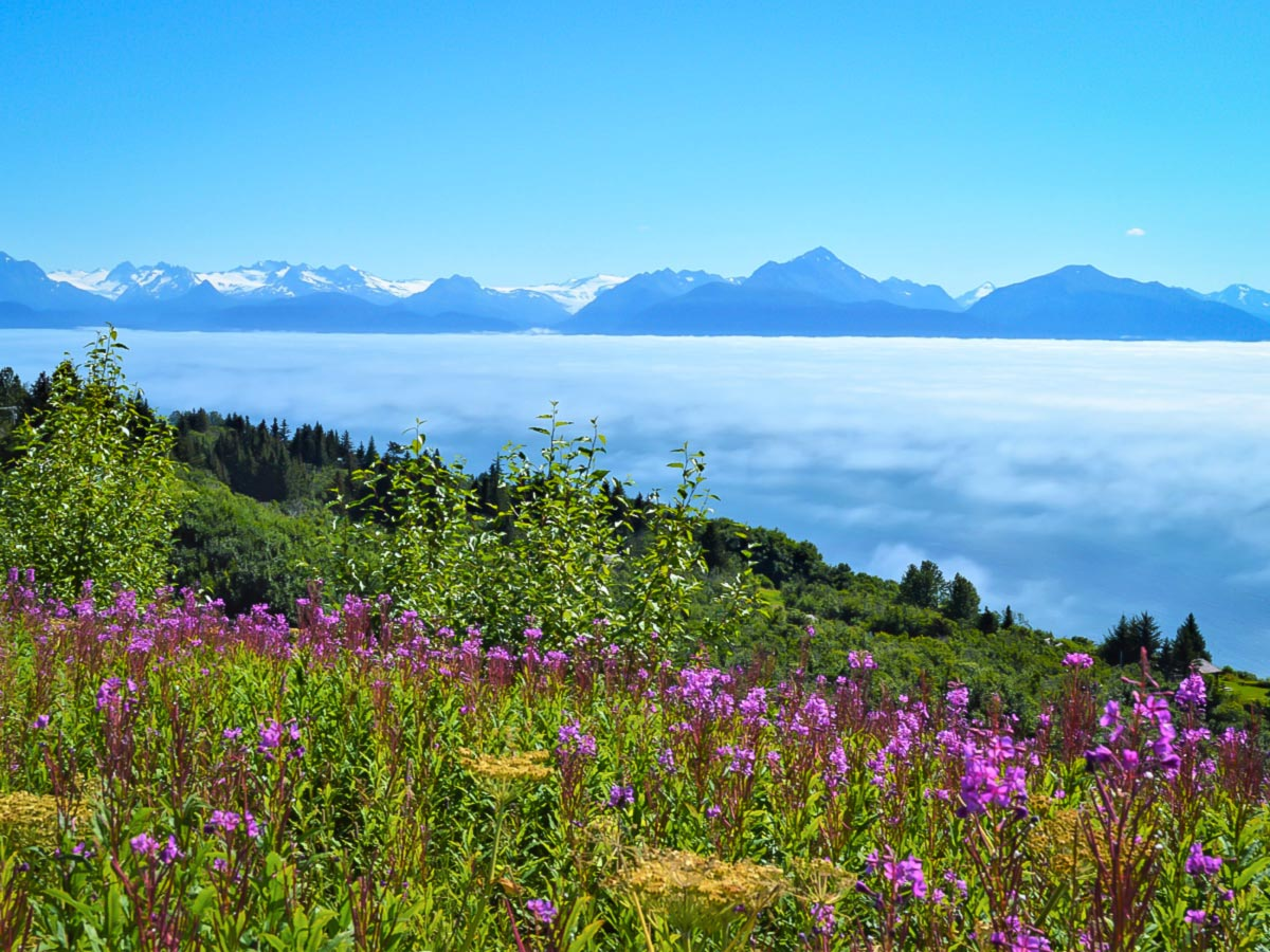 Stunning views of Kenai seen on a guided hiking tour in Alaska