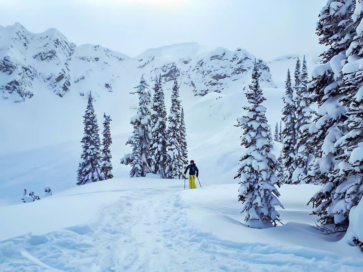 Skiing in powdery snow of BC