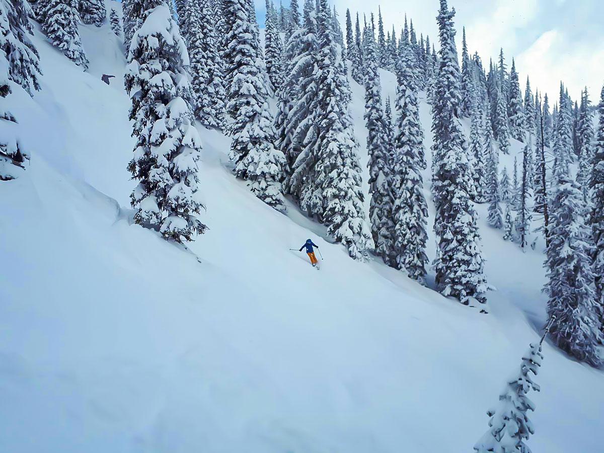 6-Day British Columbia Ski Tour, Skier