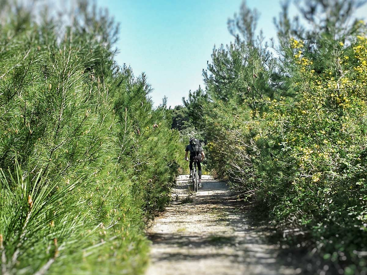 Cycling through the forest on a guided Mountain Biking in Croatian Islands Tour