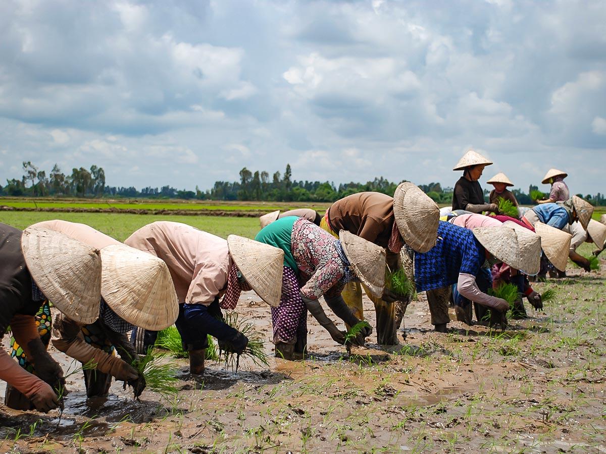 Vietnam Active Adventure Tour leads along the expansive rice fields