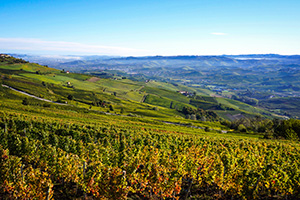 Piedmont Barolo Hills Wine & Bike Tour