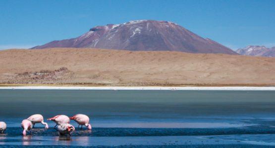 Highlights of Bolivia Tour