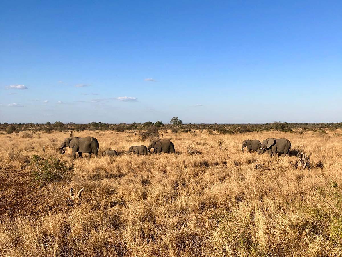 Expansive views of Kruger National Park