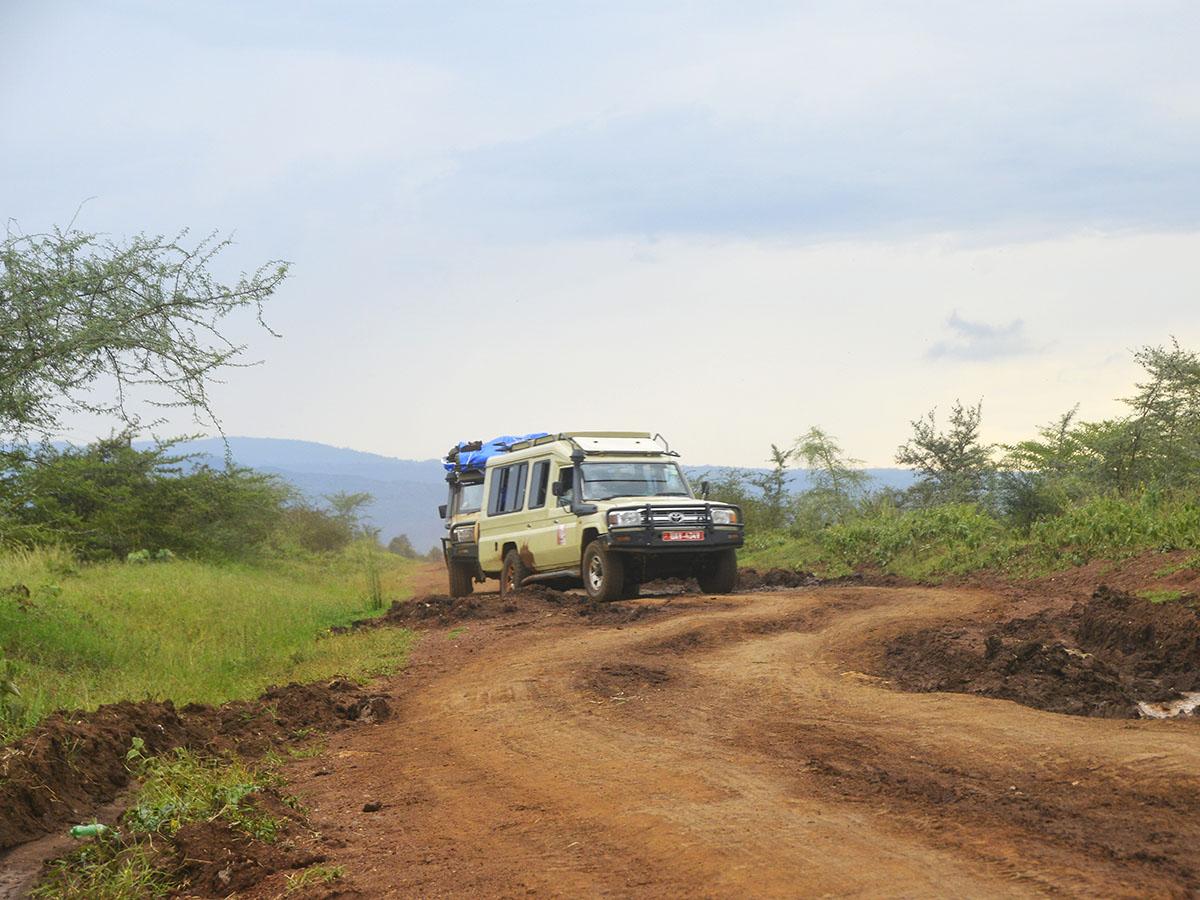 Destination Jungle Vehciles