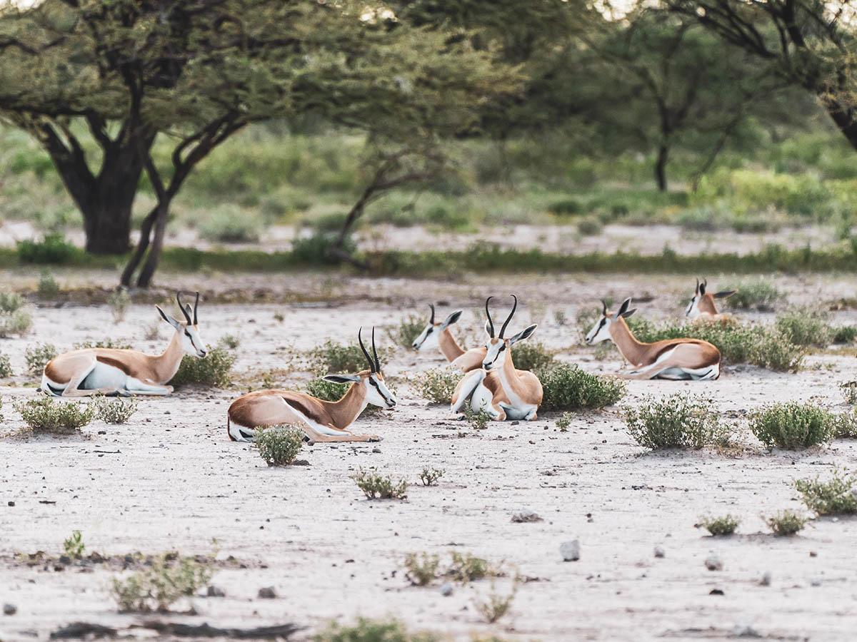 Antelopes seen on game safari while on Botswana, Zimbabwe and Namibia Adventure Tour