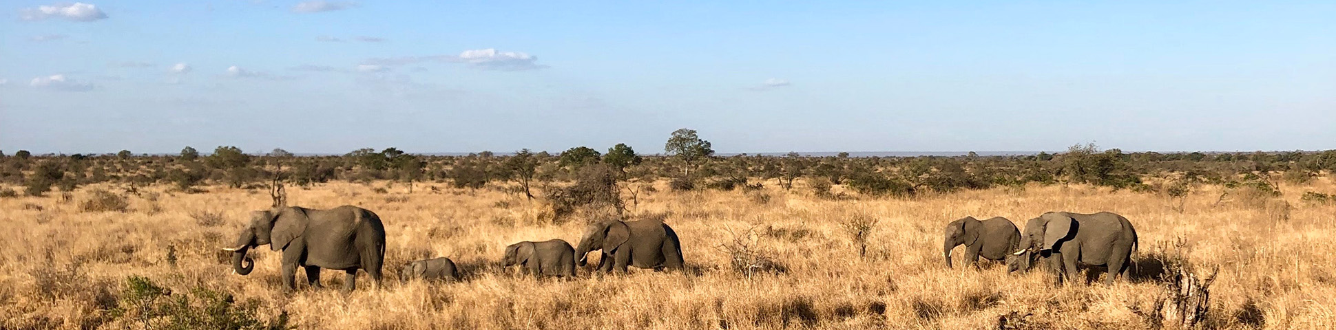 Panoramic View of Kruger National Park