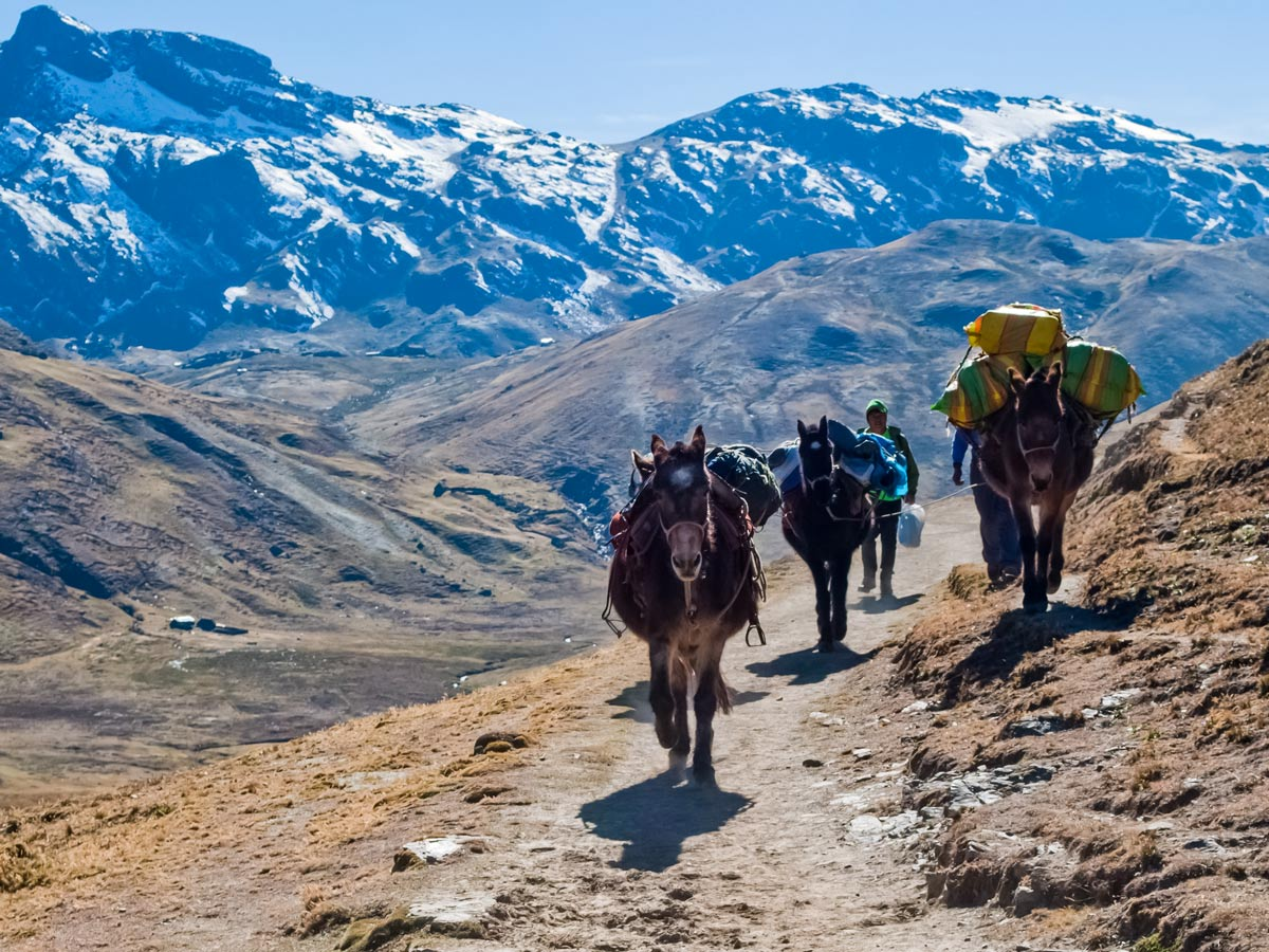 Mules horses riding in Andes Mountains Argentina