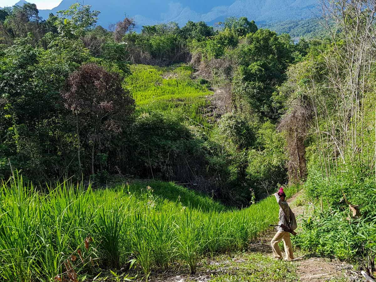 Trekking through the jungle along Sarawak Rainforest Adventure tour in Malaysia