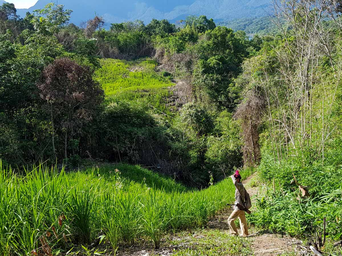 Trekking through the jungle in Malaysia on Sarawak Rainforest Adventure tour
