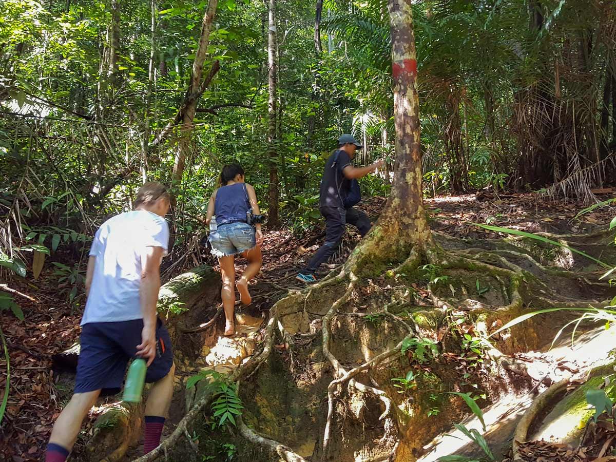 Local guuide leads trek through the jungle on Sarawak Rainforest Adventure tour in Malaysia