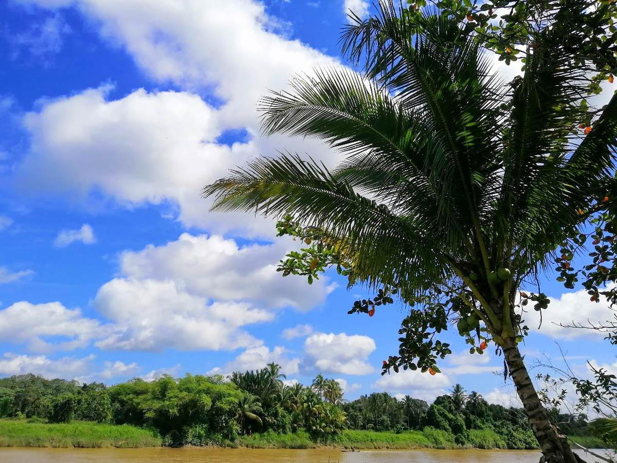 Palm trees along Malasia Headhunters Heartland bike tour