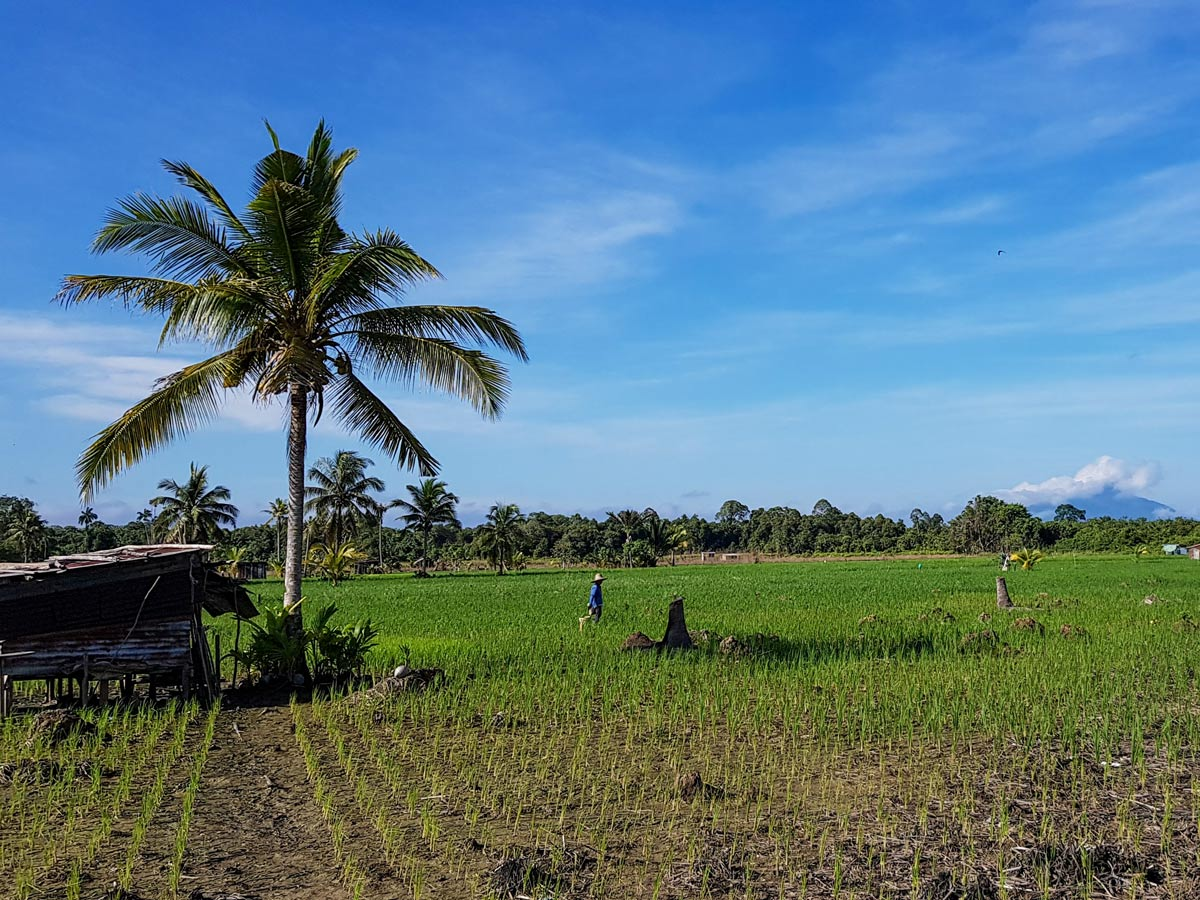 Workers in rice fields seen along Malasia Headhunters Heartland bike tour