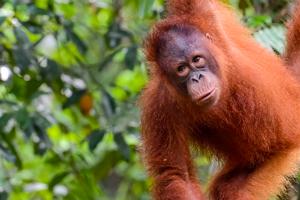 Sarawak Rainforest Bike Discovery