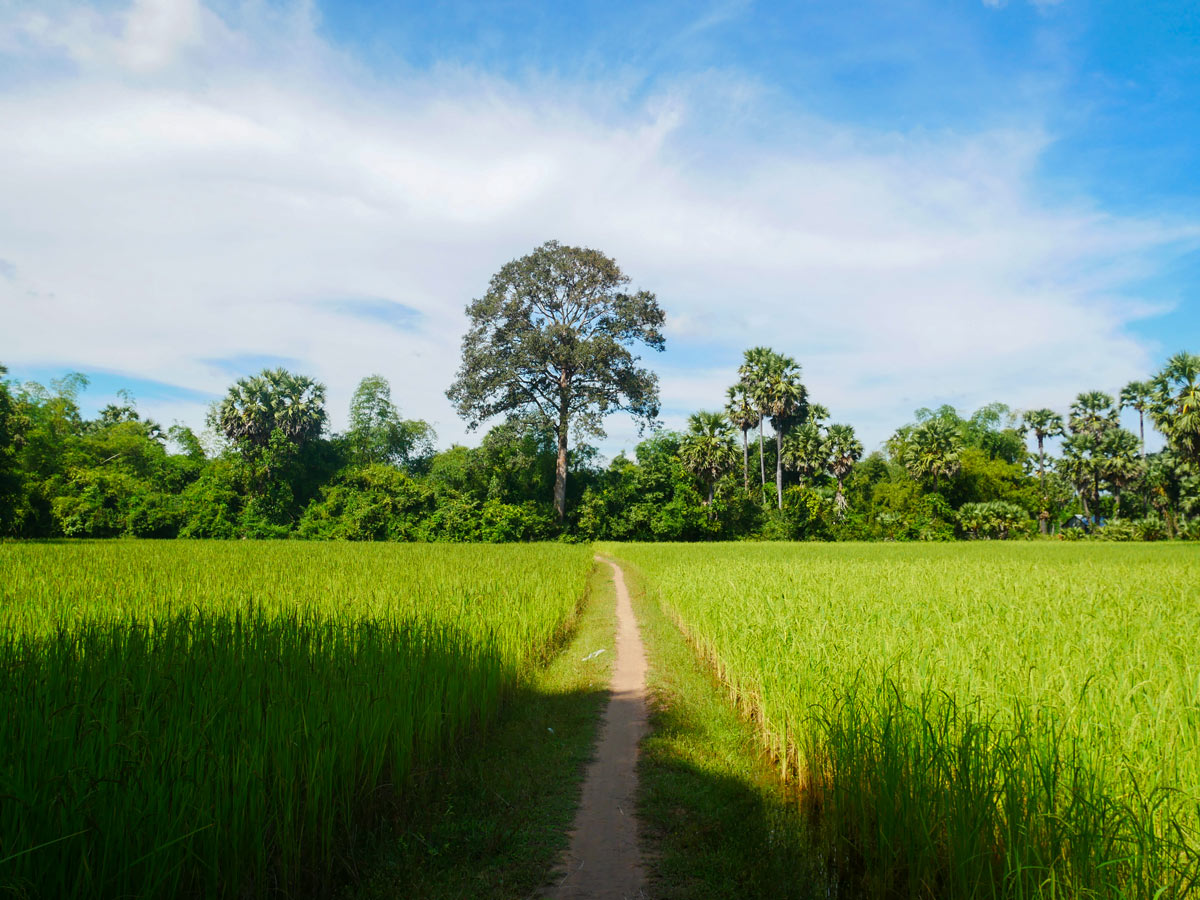 Beautiful path in Cambodia that you get to bike while on tour