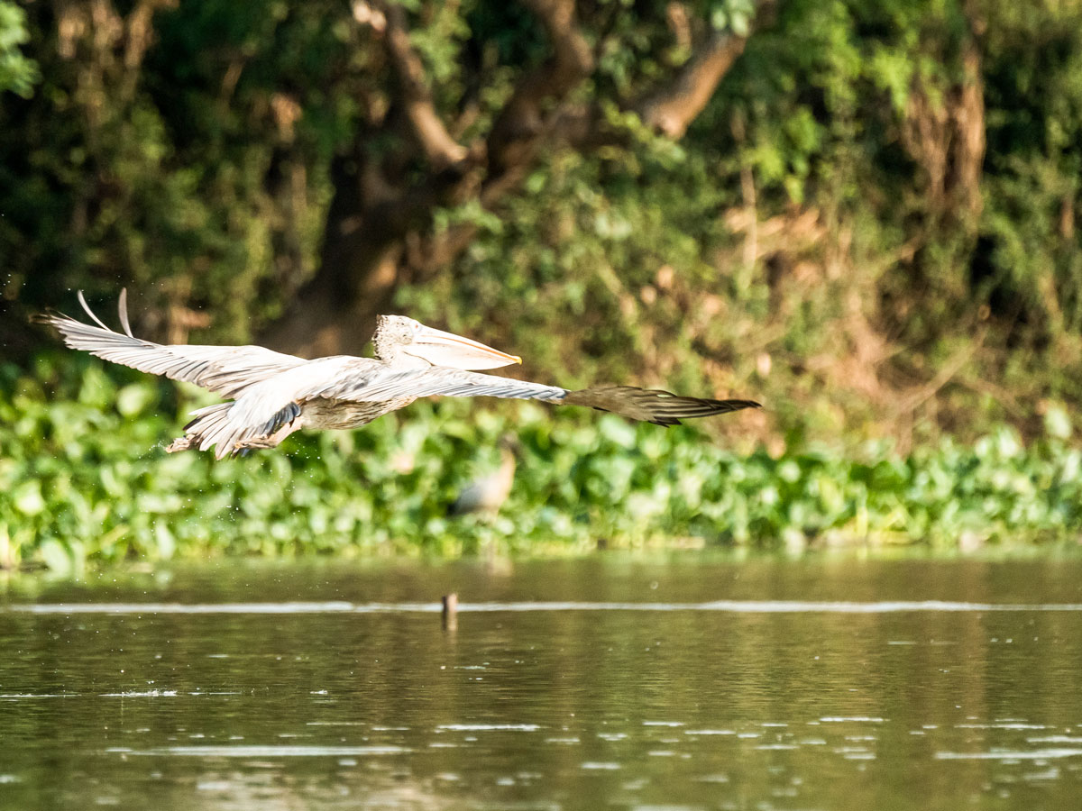 Spotting birds while on guided biking tour in Cambodia
