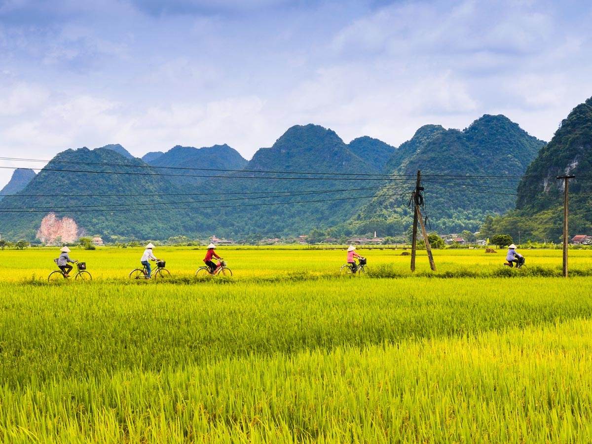Five women ride bicycle in the rice field in Lang Son