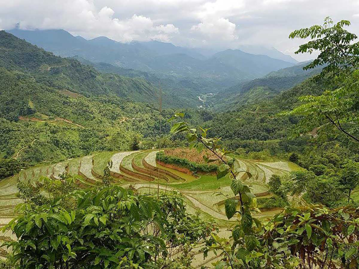 Green terraces seen along the Northern Vietnam Hiking Trail