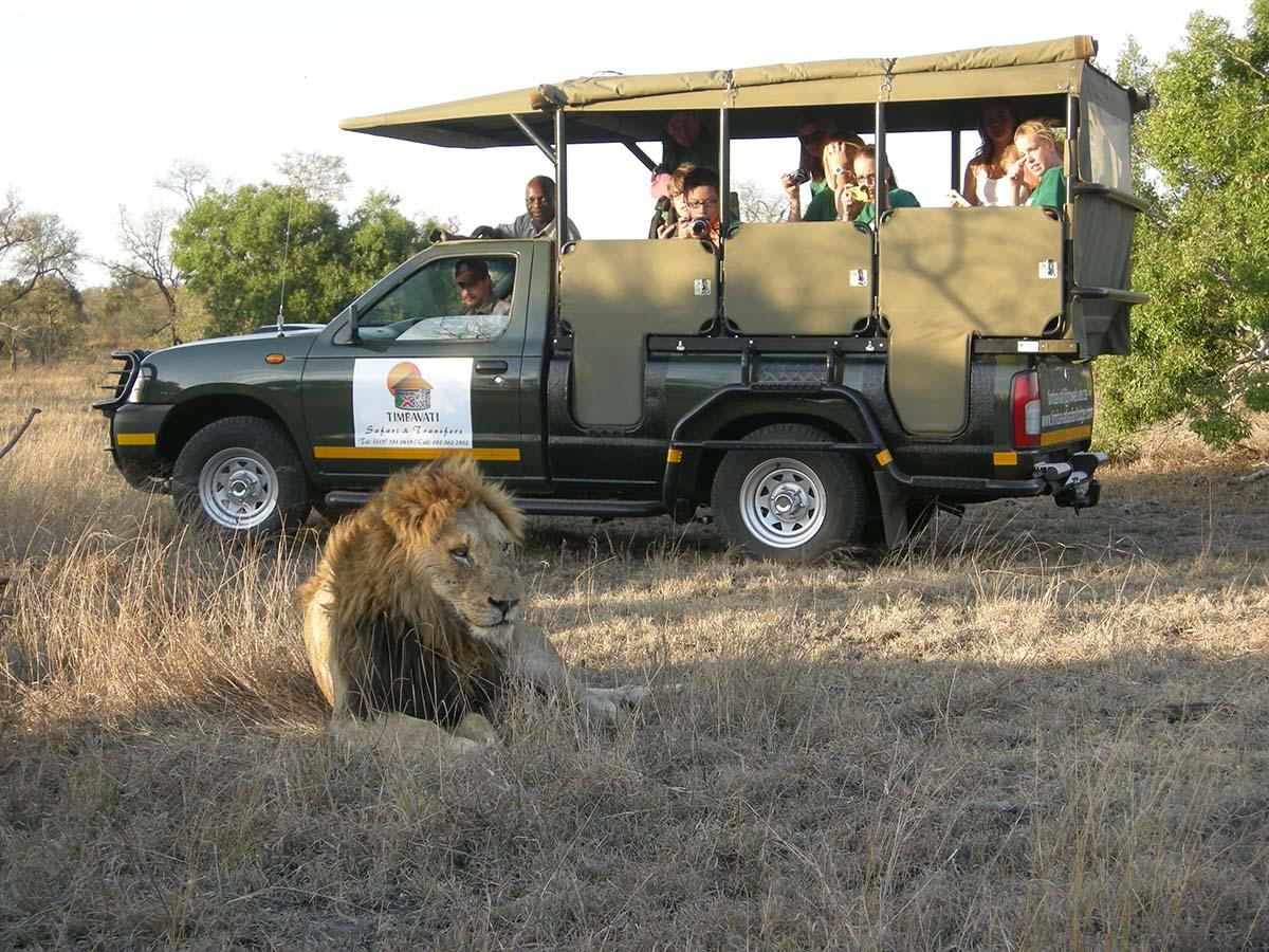 Timbavati safari lodge game drive