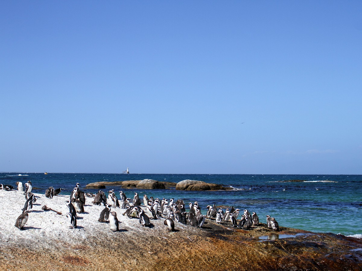 Penguins met along the Garden Route in South Africa
