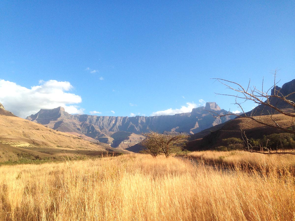 Yellow meadow in Drakensberg Mountains, South Africa