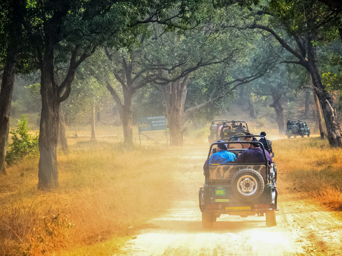 Safari Jeeps drive along dirt roads on temples and tigers wildlife and culture adventure tour in India