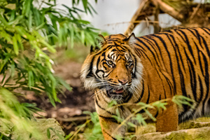 Himalayas and Tigers Safari Tour