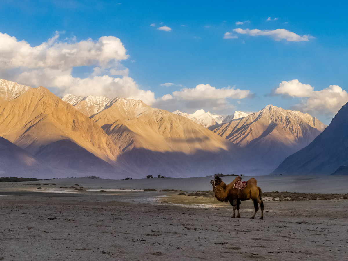 Camel riding Nubra Valley hiking in India