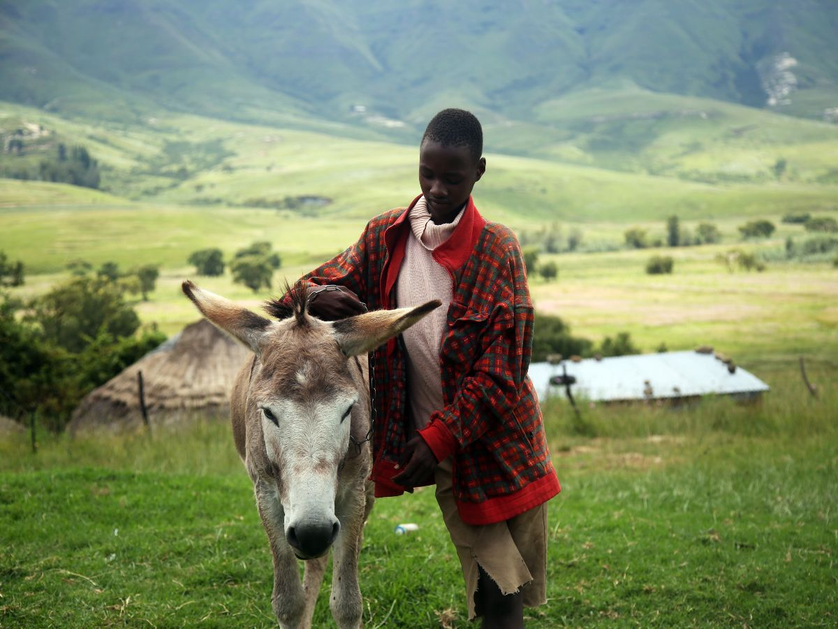 Young boy and a donkey in Lesotho guided Southern Africa Tour