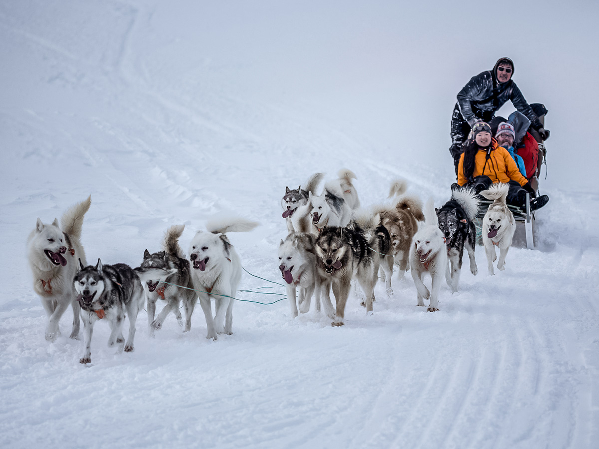Dog Sledding tour across snow fields Greenland