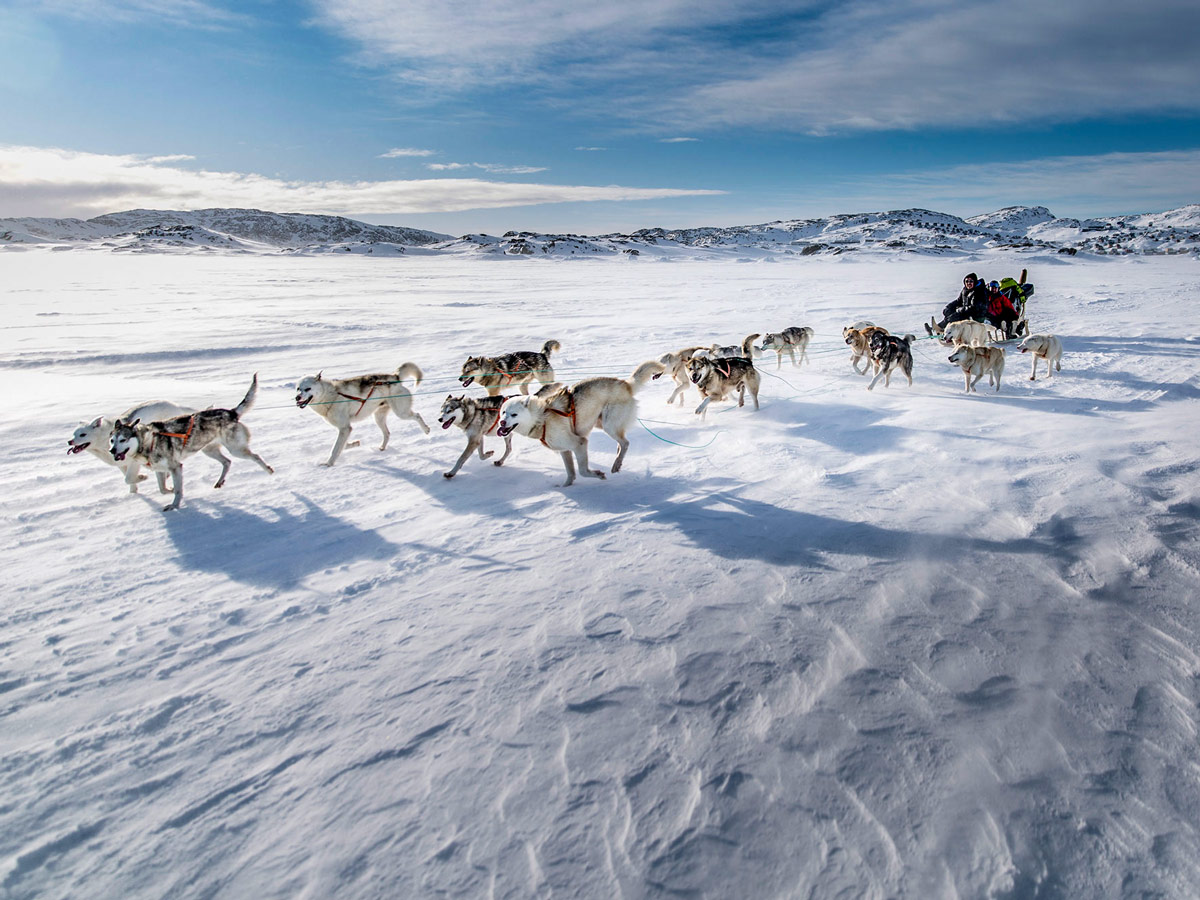 Sled dogs running aross frozen tundra Dog Sledding tour Greenland