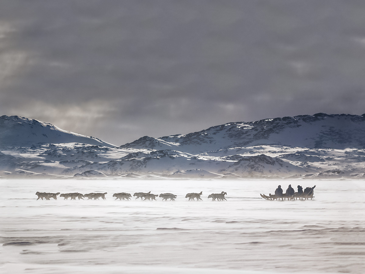Dog Sledding across icy tundra in Greenland