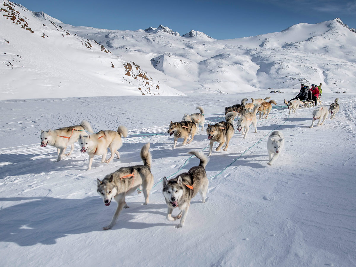 Huskies Dog Sledding adventure tour Greenland