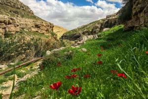 Jericho to Jerusalem through Wadi Qelt Tour