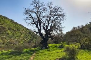 Complete Golan Trail Hiking Tour