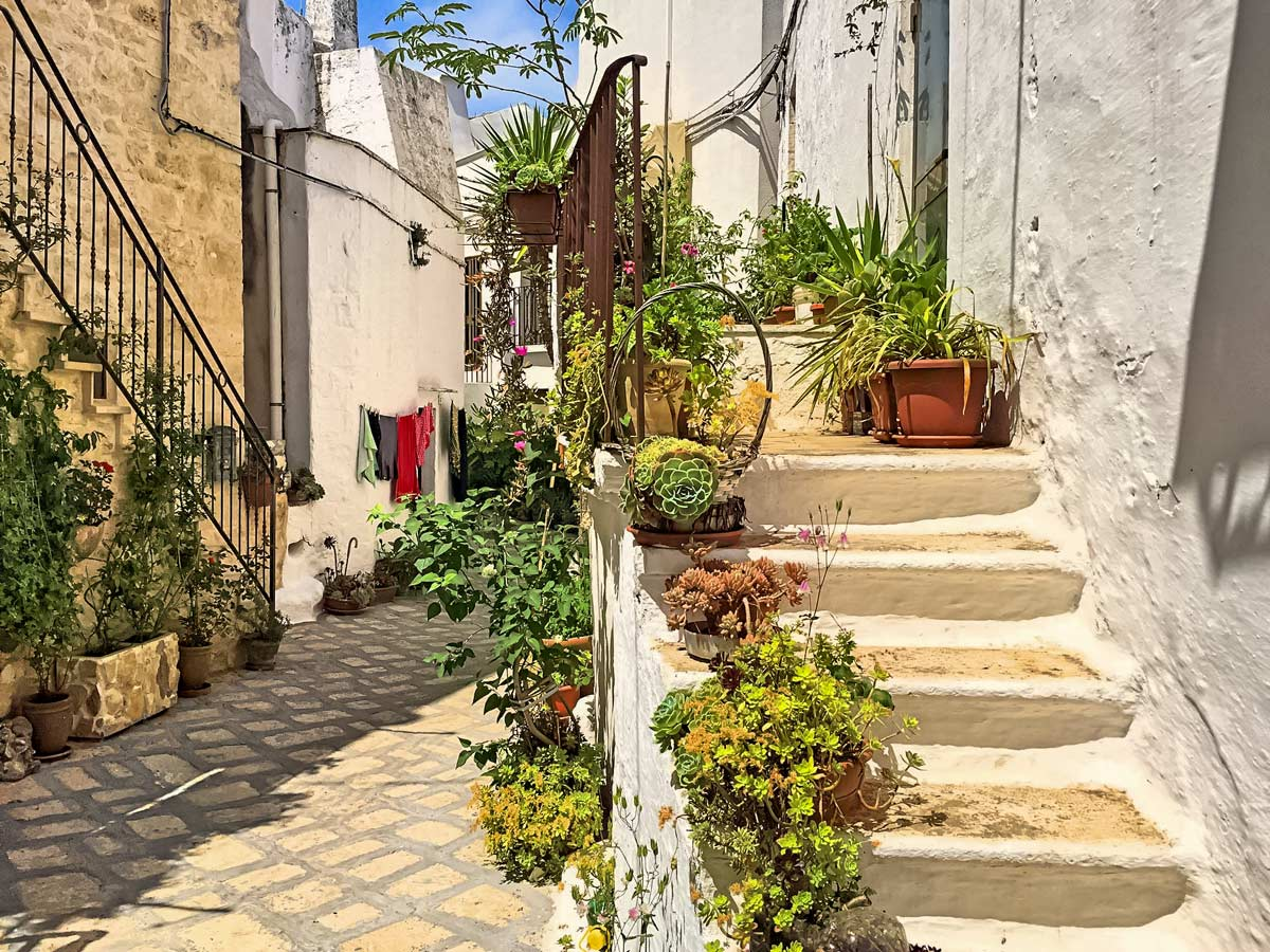 Beautiful old homes plants succulents in Ostuni Italy