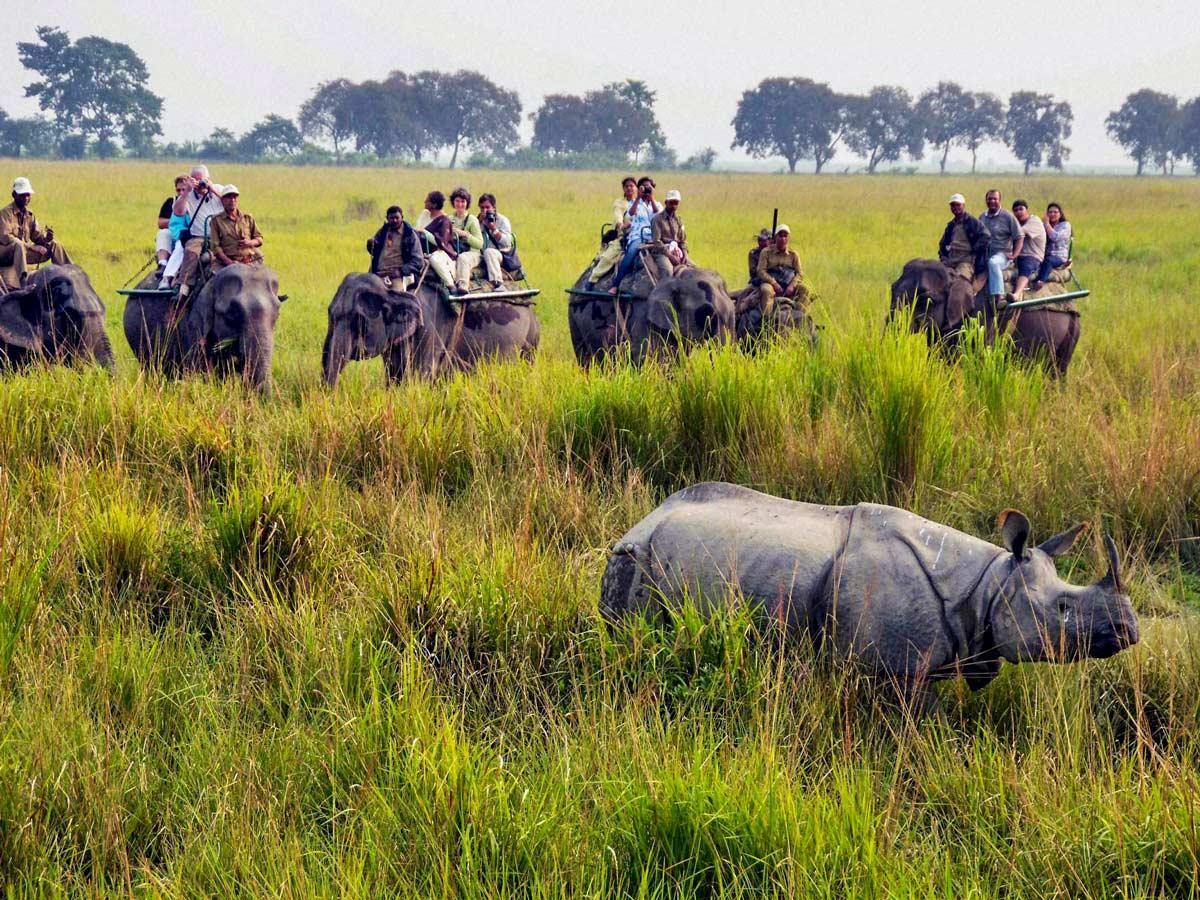 TransIndia Elephant riding Safari in Kaziranga National Park in North East India