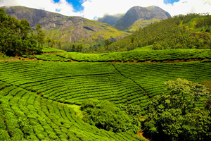 Houseboating and Safari in Karnataka & Kerala Tour