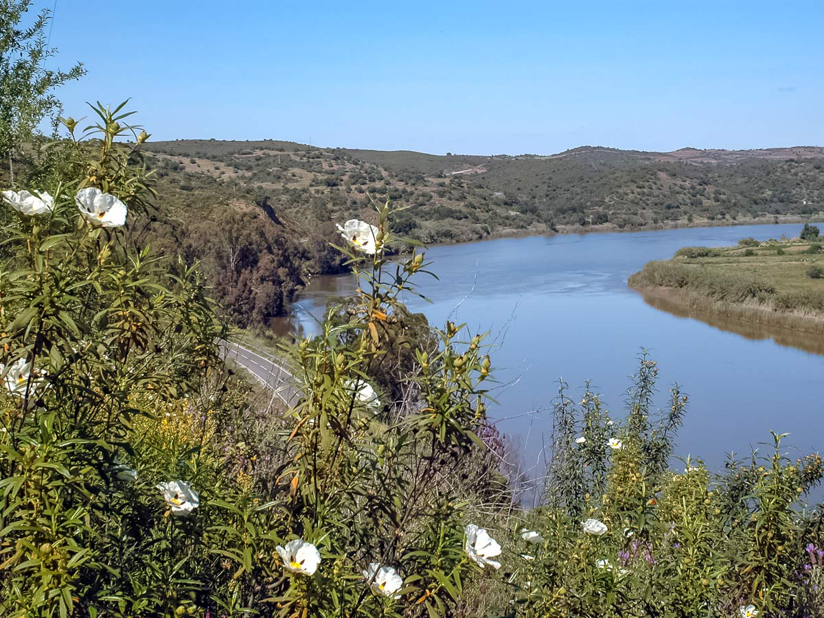 Road biking in Portugal Rio Flores flowers road river